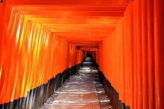 Thousands of Torii