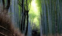 The Bamboo Path