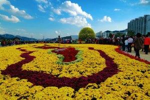 Chrysanthemums and Nothing but Chrysanthemums...