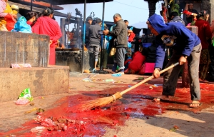 A Volunteer Sweeps up a River of Blood Between Ritual Sacrifices