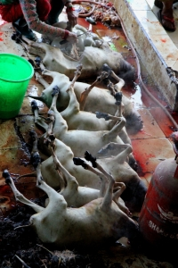 A Row of Goat Carcasses Waiting to be Gutted During the Cleaning Process