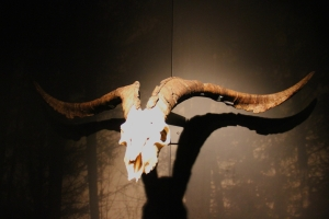 A Goat Skull - a symbol of Fertility (not the Devil)...