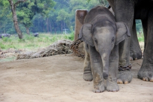 The Littlest Elephant - only 4 months old!