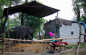 A Privately Owned Elephant! Yes, the People Actually Live in that Shack!