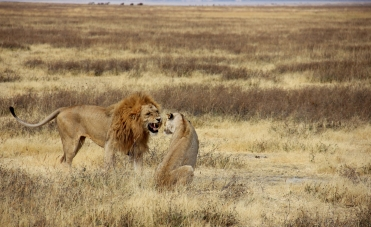 These two were having some fun together (it was mating season)!